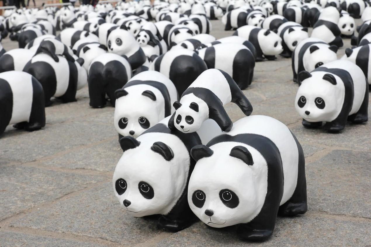 panda a lot of panda