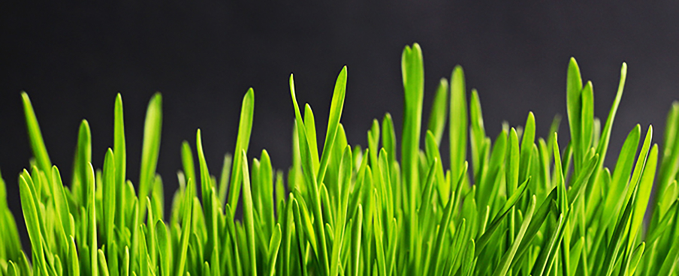 The Grass is Greener2