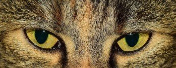 eyes-1191742_960_720